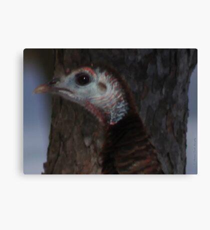Portrait of a Wisconsin Wild Turkey Canvas Print