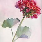 Red Geranium by Pat Yager