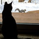 Kitty TV by Mikell Herrick