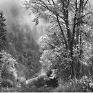 Autumn Sparkles on Green Mountain by John Poon
