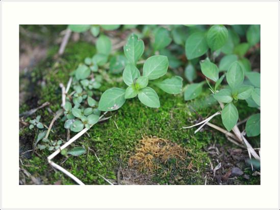 Moss by Lauren Morris