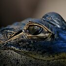 Young Gator in the Everglades  by Michael Beers