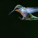 Incoming - Ruby-throated hummingbird by Jim Cumming