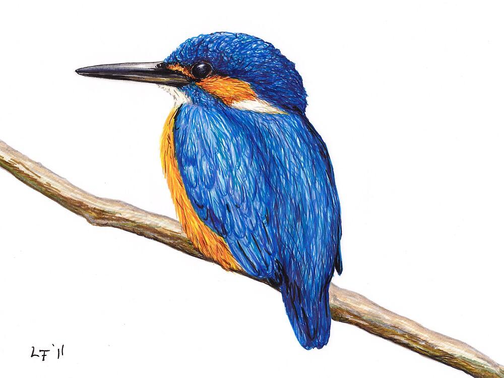 Kingfisher by Lars Furtwaengler