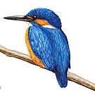 Kingfisher by Lars Furtwaengler