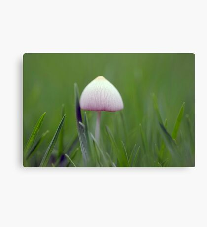A tiny white mushroom hiding in the grass Canvas Print