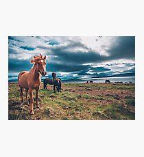 Islandpferde Fotodruck