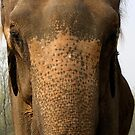 An Elephant's Wise Wrinkles by katy fotography