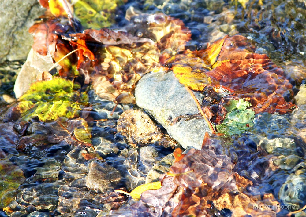 Autumn Colours by Mickey Rooney
