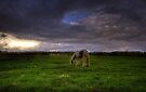 Gypsies on the Common by Nigel Bangert