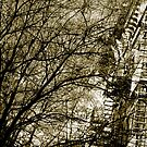 abstraction in Trees in NYC by linaji