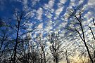 Evening Sky 0094 by NatureGreeting Cards ©ccwri