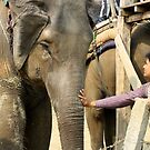 Reaching Out To An Elephant by katy fotography