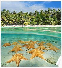 tropical shore split with sea stars underwater Poster