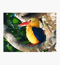 THE GREAT KINGFISHER Photographic Print