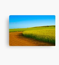 Canola Fields Mid North Canvas Print