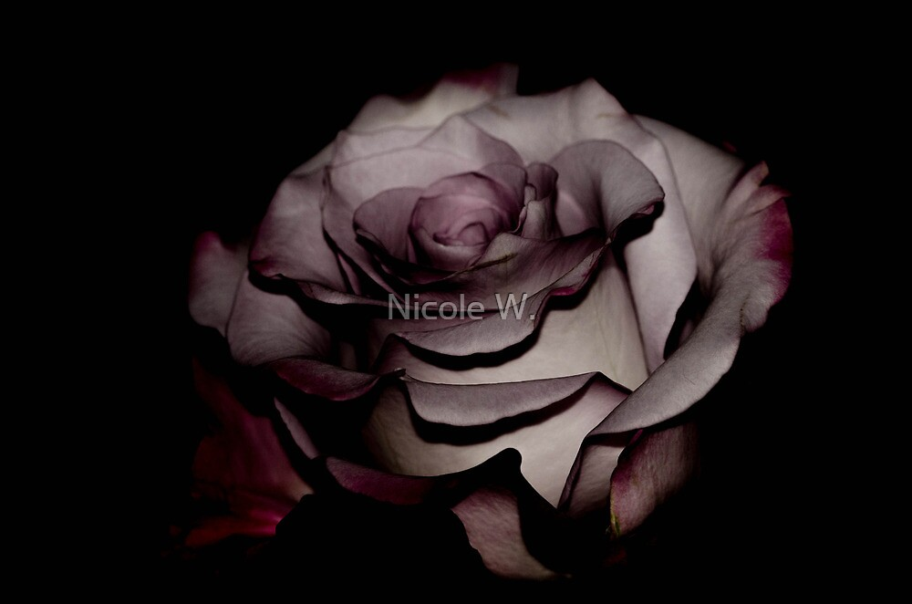 some rose by Nicole W.