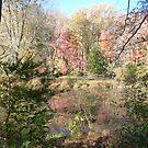 Autumn riches on Greenbelt Lake by nealbarnett