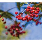 豐盛的果子 by PHILIP H.P. WONG