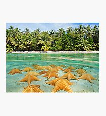 split tropical beach shore starfish underwater Photographic Print