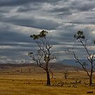 Australian summer sky by Keith Midson