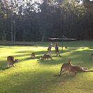 Iconic Kangaroo under Hills Hoyst !!! by LESLEY BUtler