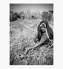Woman farming in Rajasthan, India Photographic Print