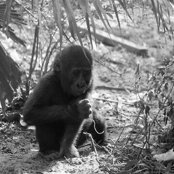 Baby Gorilla by Maliknotmalik