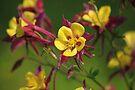 Colourful Garden by John Dalkin