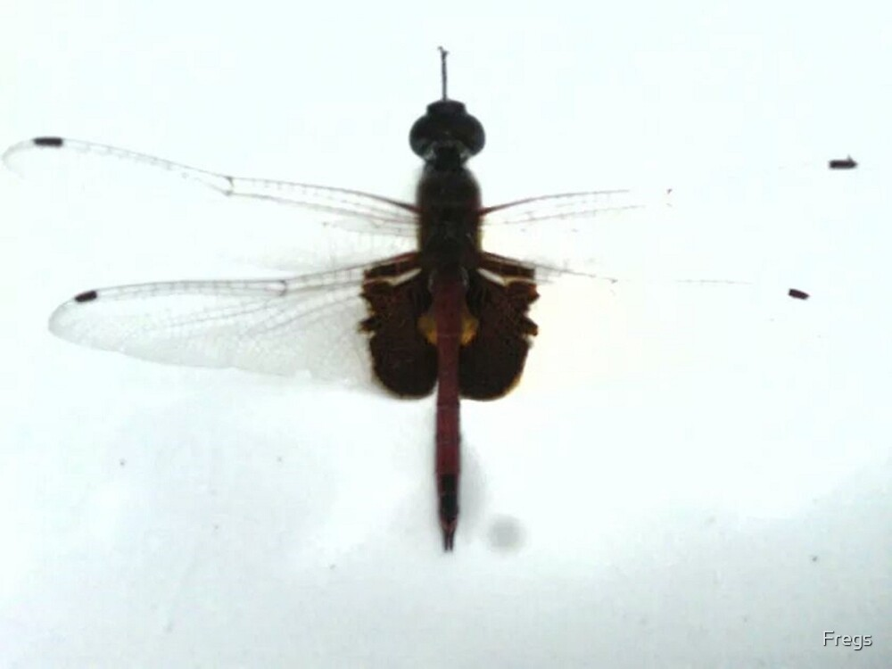 Dragonfly (Medical) by Fregs