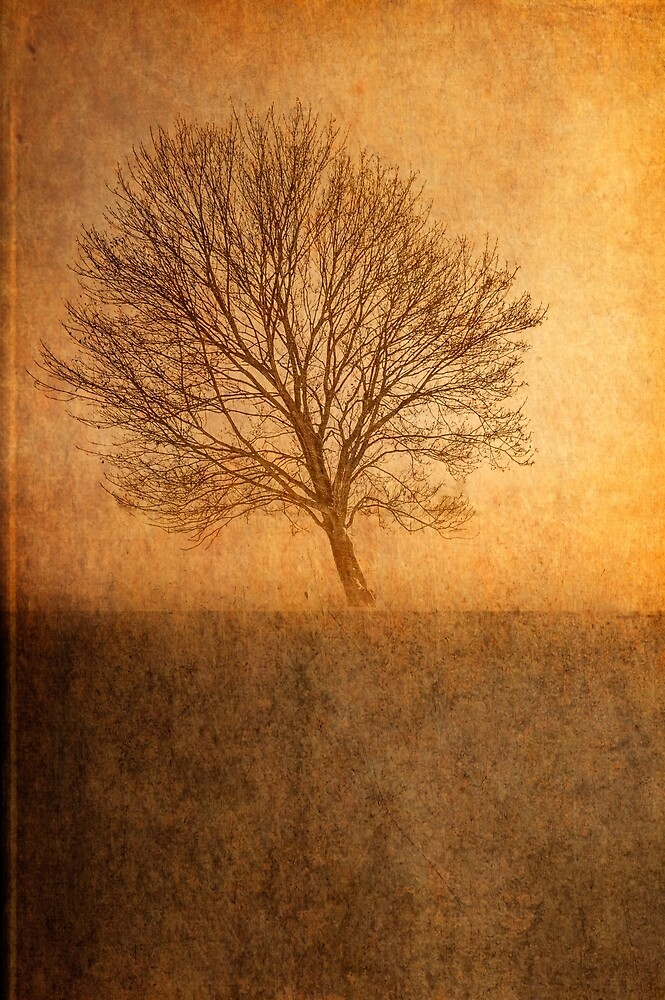 Single Tree by Garvin Hunter Photography