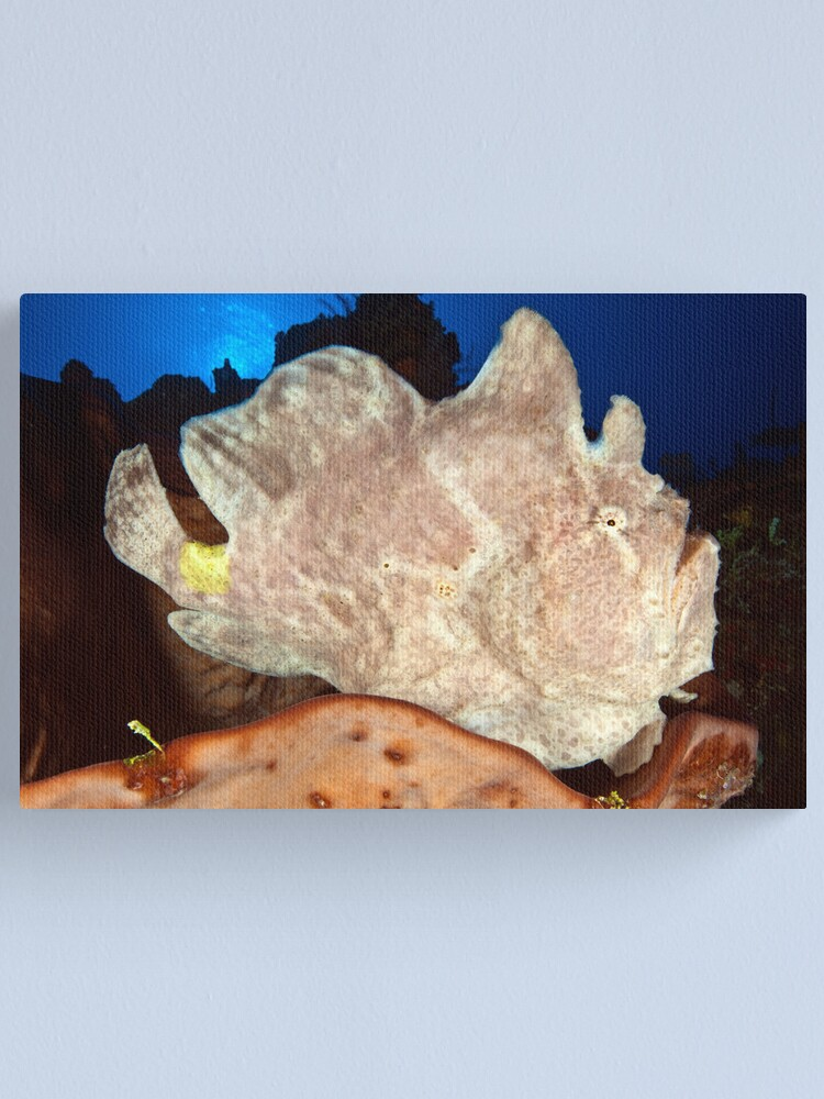 Alternate view of Frog on the reef Canvas Print