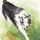 Herding dog watercolor by Mike Theuer
