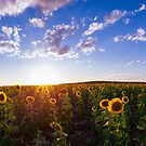 Sunshine and Sunflowers by McguiganVisuals