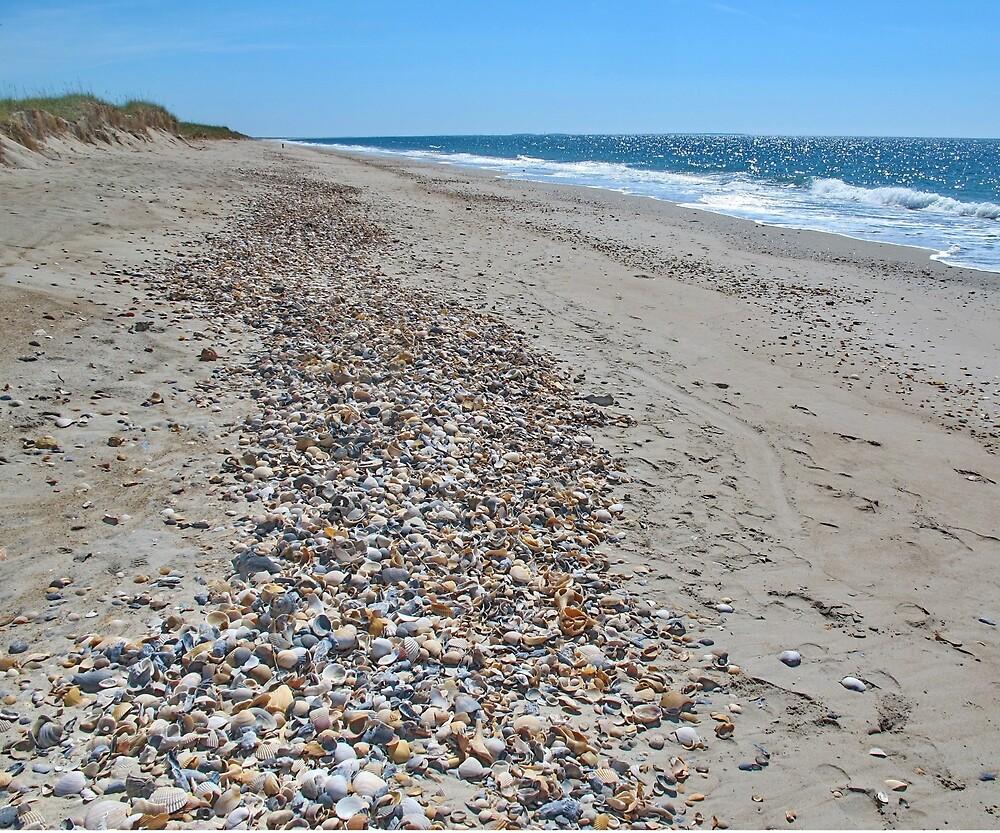 Beach shells on Shackleford Bank by Robert Angier