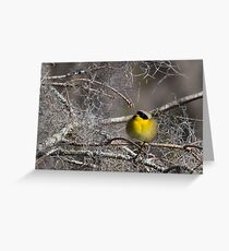 Common Yellowthroat (Geothlypis trichas) Greeting Card