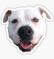 Adopted - American Bulldog Sticker