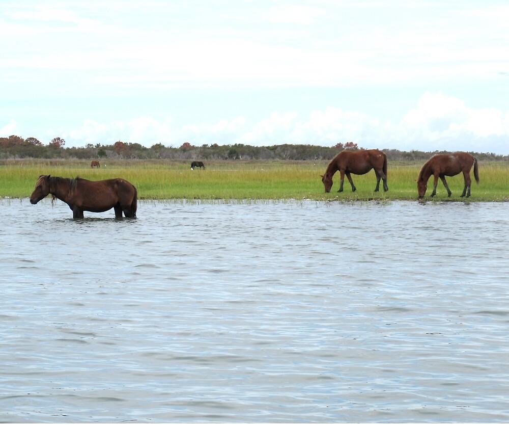 Wild horses of Shackleford Bank by Robert Angier