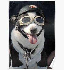 Biker Dog Poster