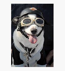 Biker Dog Photographic Print