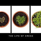 Life of Cress by Anne Gilbert