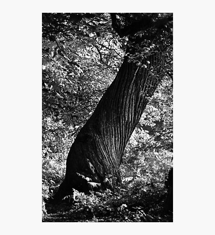 Woodland Twister Photographic Print