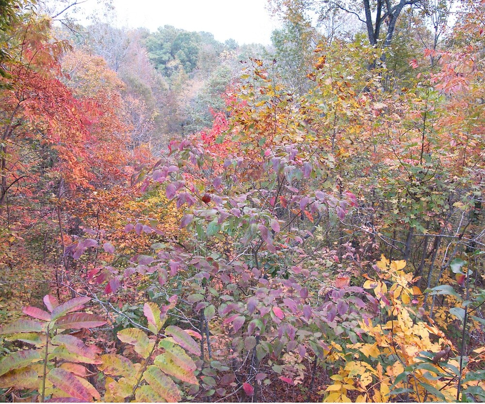 Fall colors emerge by Robert Angier
