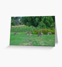 Australian Bush Kangaroo Greeting Card