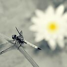 Dragonfly and Water Lily by Sharon Woerner