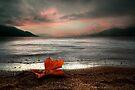 Lonely Tear Drop by John Poon