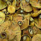 Mushrooms by Martyn Franklin
