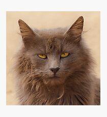 cat's portrait Photographic Print