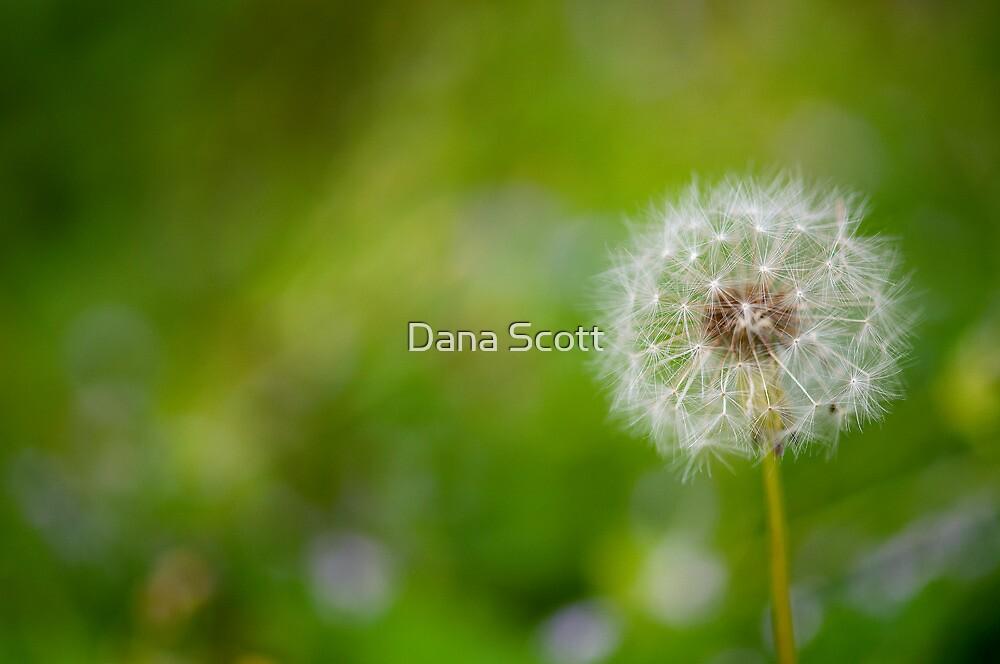 Make a Wish by Dana Scott
