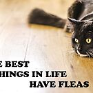 The Best Things In Life Have Fleas von MMPhotographyUK